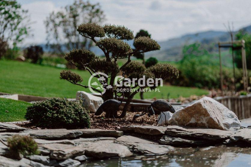 bonsai-w-wodzie