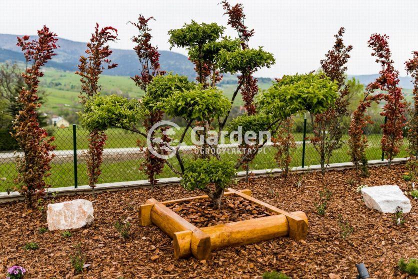 deren-bonsai-ogrod