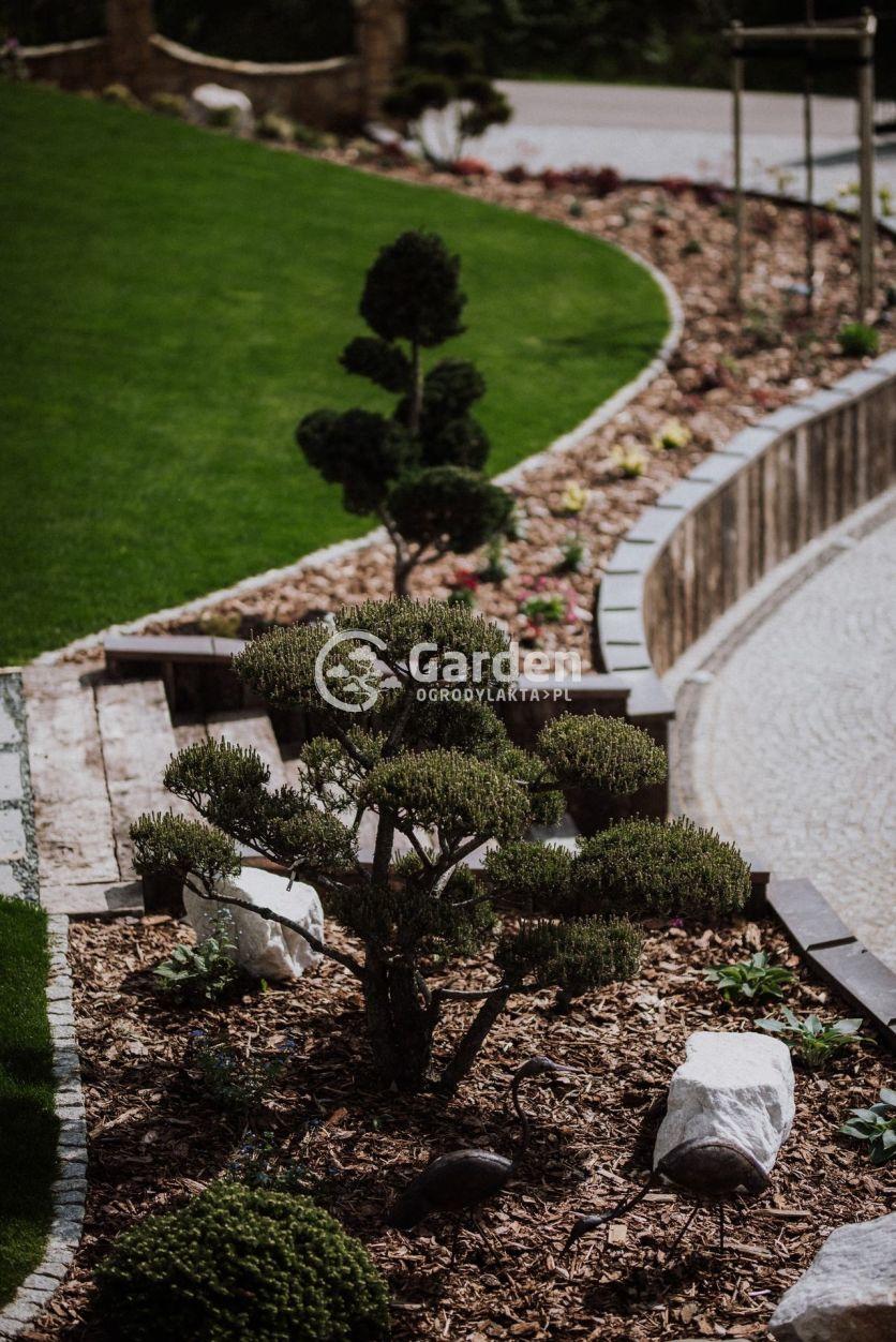 drzewka-formowane-garden