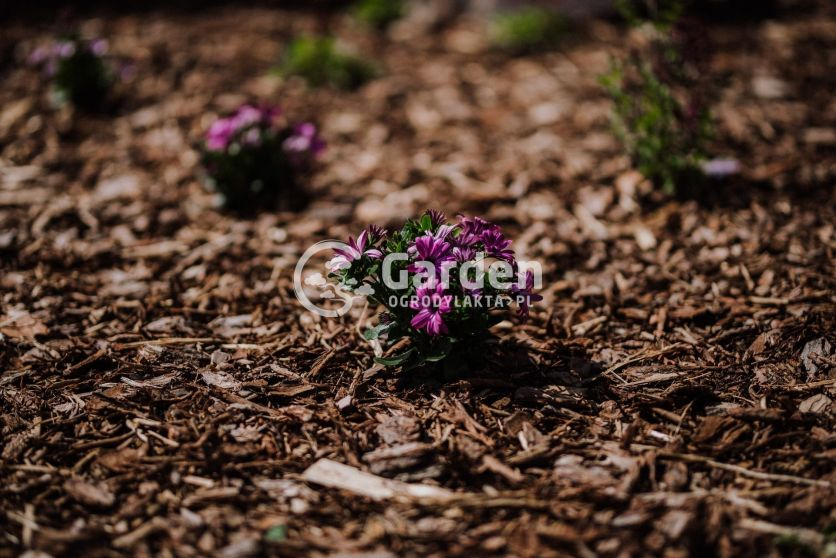 ogród-13