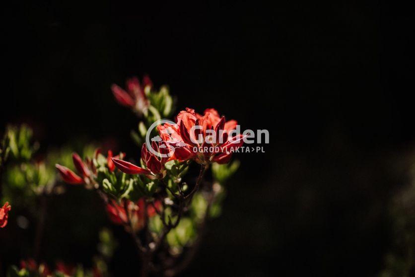 ogród-36