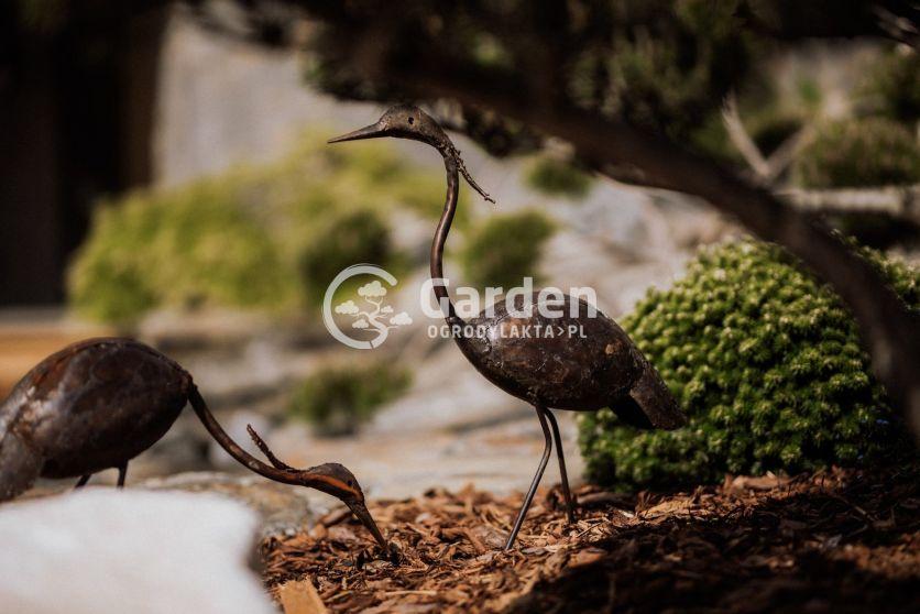 ptaki-w-ogrodzie