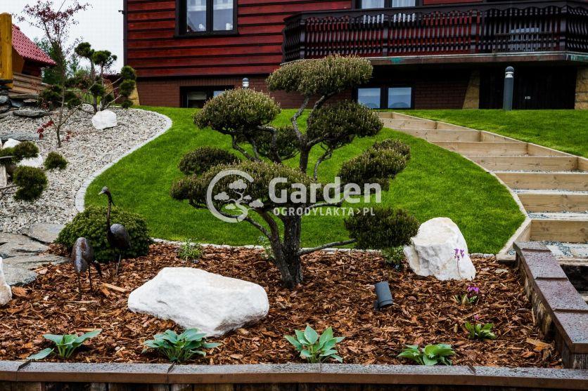 sosna-bonsai-drzewko-formowane-ogrod